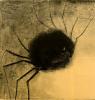 thesmilingspider