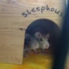 Et Cetera the Mouse