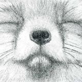 foxberlin