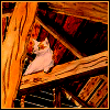 Cat in the Rafters