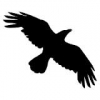 Ravencrow